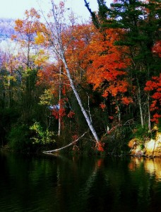 colorful leaves on the trees by Luray Lake in North Carolina