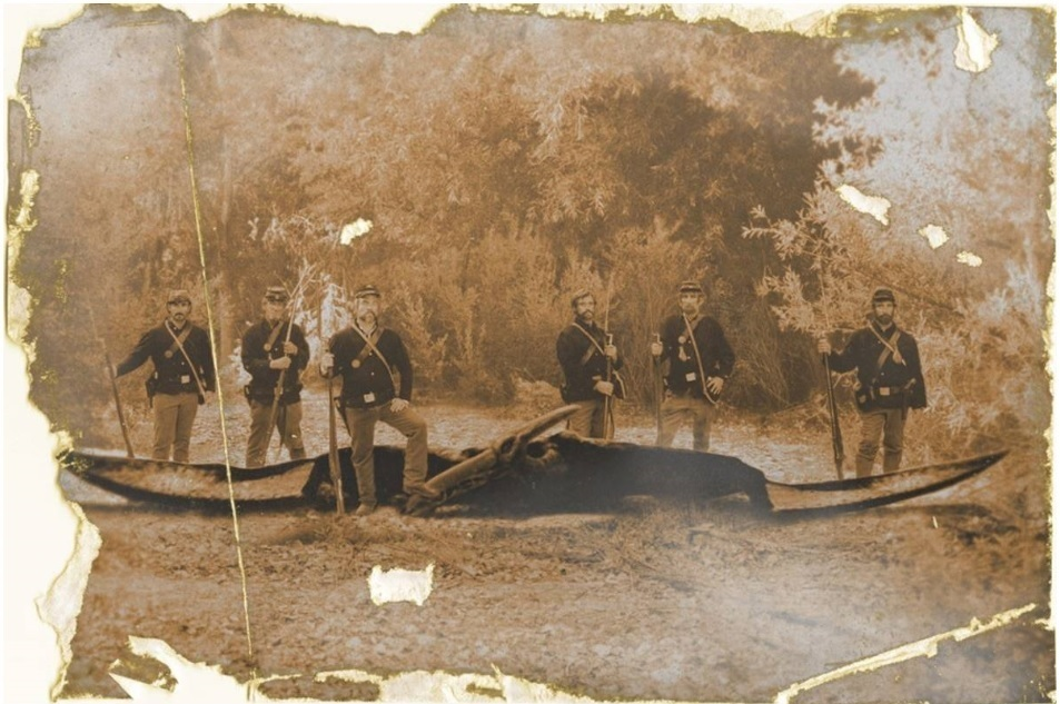 "recently deceased pterosaur (""pterodactyl"") in an old photograph"